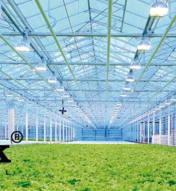 Led en la horticultura – Good Work Internacional